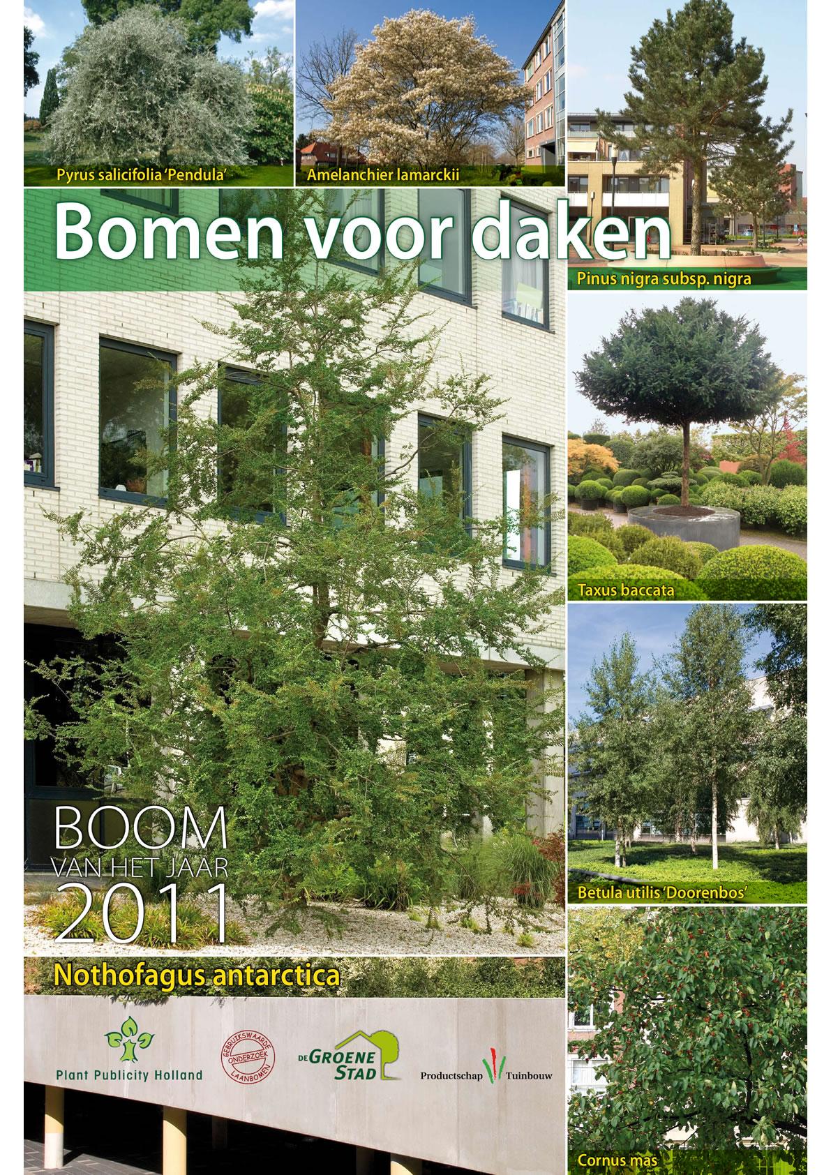 Boom van het jaar 2011