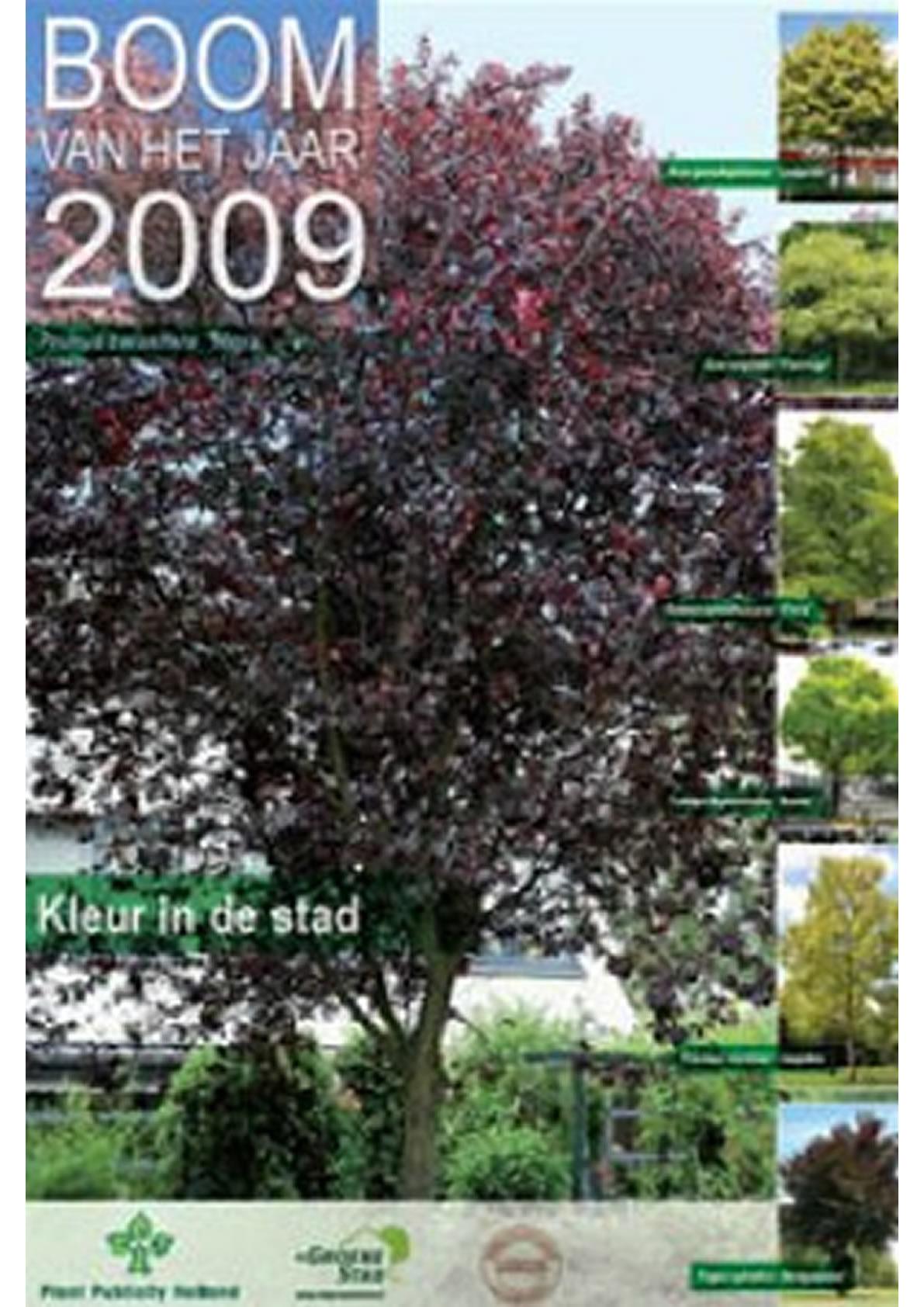 Boom van het jaar 2009